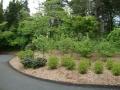 mixed shrub border along driveway