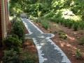 woodland garden in the summer