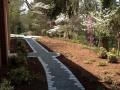 woodland garden in the spring