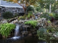 koi pond and waterfalls